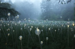 Light - Installations by Bruce Munro at Longwood Gardens_04