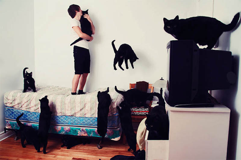 Andreanne Lupien Crazy Cat Lovers_02