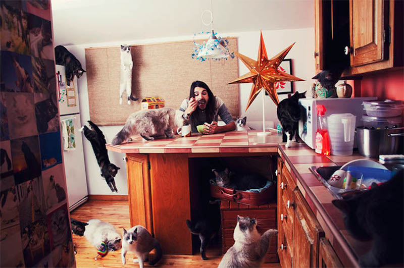 Andreanne Lupien Crazy Cat Lovers_08
