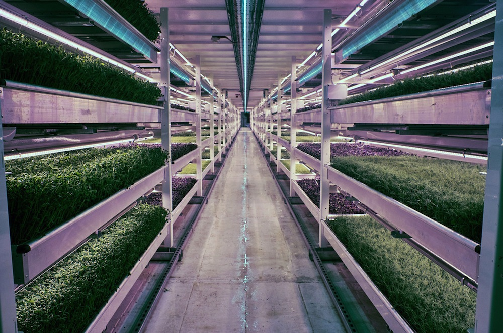 Growing Underground-WWII-bomb-shelter-turned-into-hydroponic-farm-culture and life-01