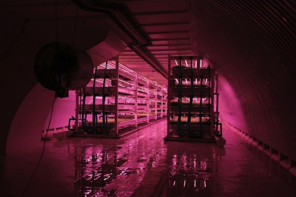 Growing Underground-WWII-bomb-shelter-turned-into-hydroponic-farm-culture and life-02