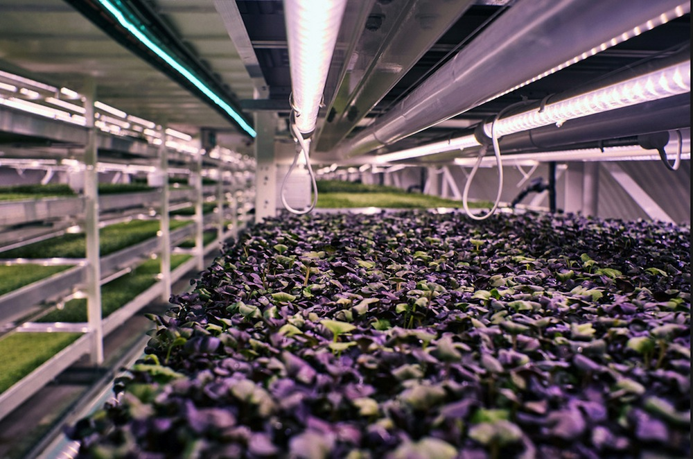 Growing Underground-WWII-bomb-shelter-turned-into-hydroponic-farm-culture and life-07