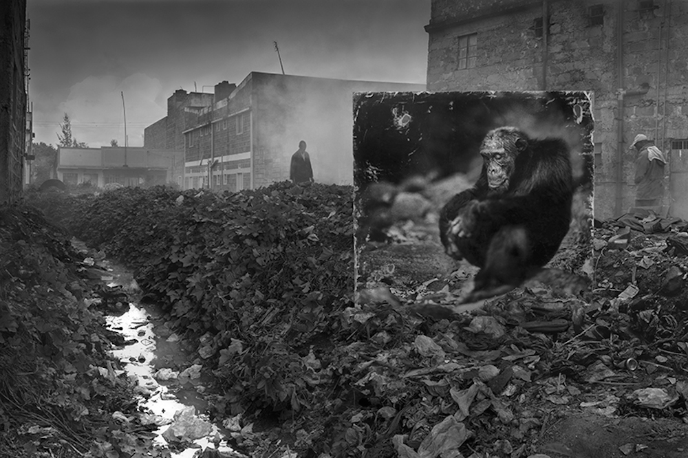 Nick Brandt_Inherit The Dust_Alleyway With Chimpanzee